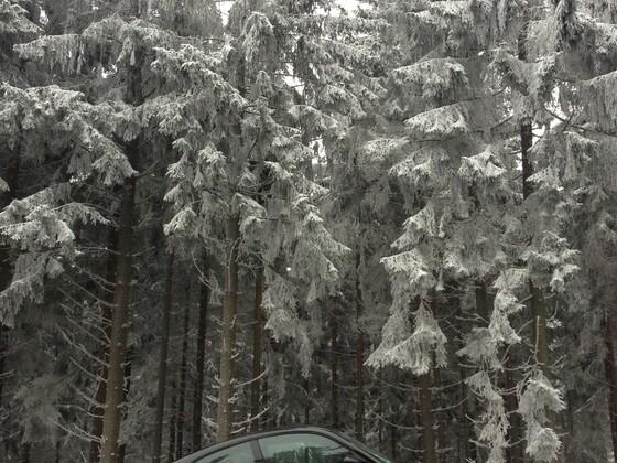 Elfer im Winter