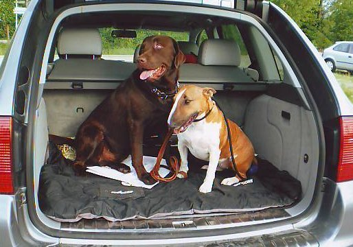 Bulli&Labbi&Cayenni